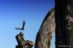 Bird flies over the henge