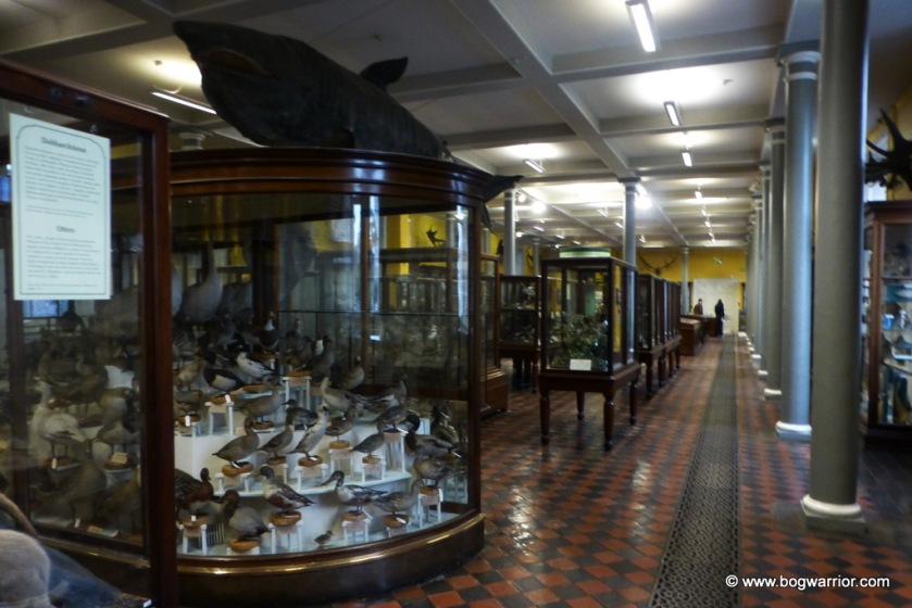 Interior of the Natural History Museum